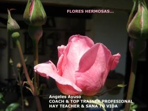 FLORES HERMOSAS...